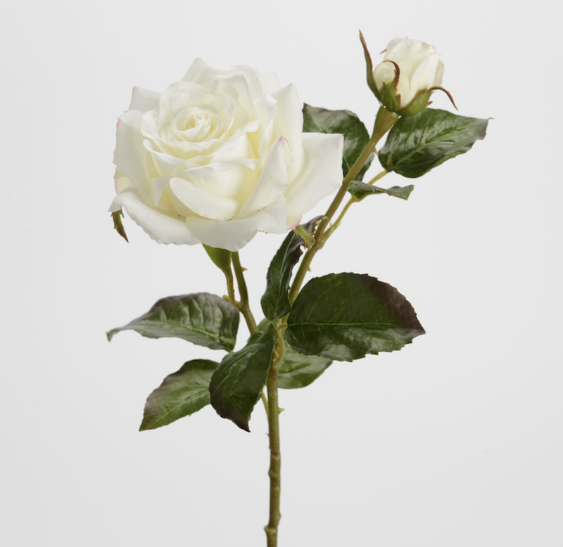 Rosa gala blanca