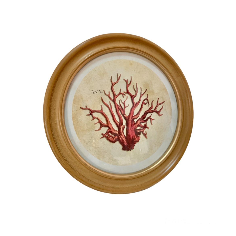 Cuadro corales